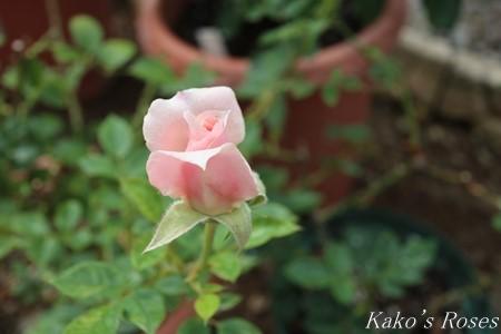 s-IMG_3690kako.jpg