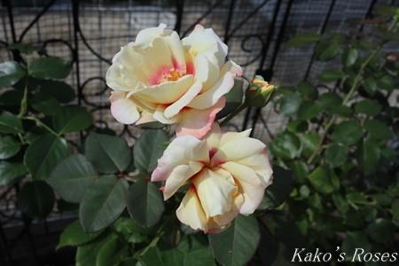 s-IMG_3719kako.jpg