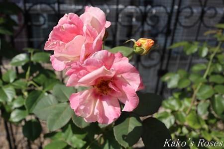 s-IMG_3739kako.jpg