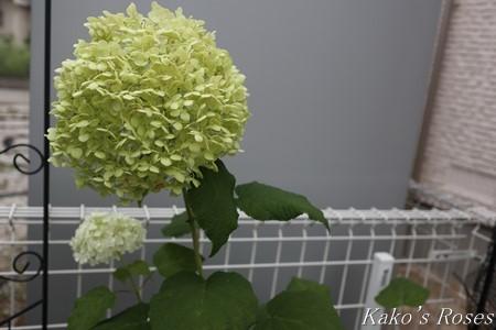 s-IMG_3774kako.jpg