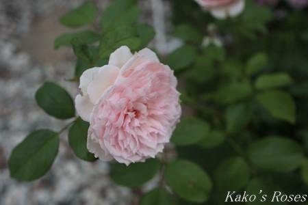s-IMG_3776kako.jpg