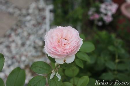 s-IMG_3777kako.jpg