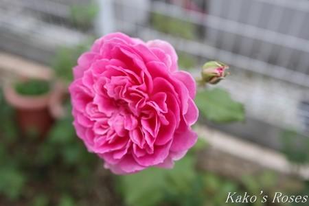 s-IMG_3779kako.jpg
