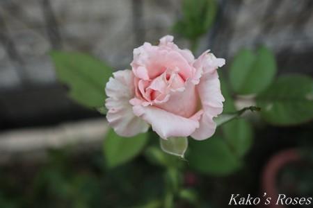 s-IMG_3783kako.jpg