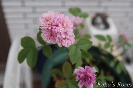 s-IMG_3789kako.jpg