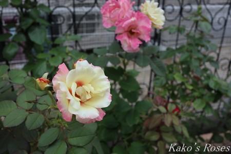 s-IMG_3795kako.jpg