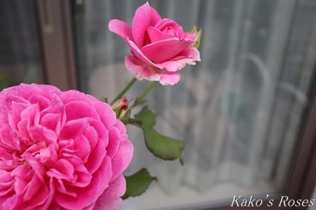 s-IMG_3801kako.jpg