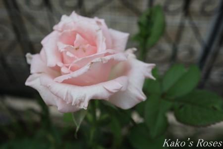 s-IMG_3814kako.jpg