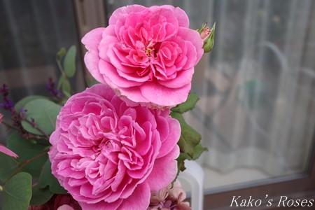 s-IMG_3816kako.jpg