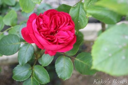 s-IMG_3818kako.jpg