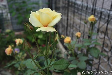 s-IMG_3820kako.jpg