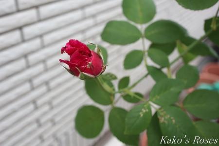 s-IMG_3821kako.jpg