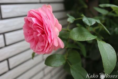 s-IMG_3834kako.jpg