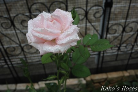 s-IMG_3851kako.jpg