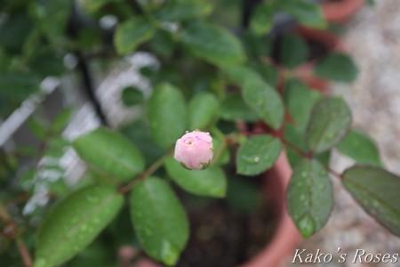 s-IMG_3879kako.jpg