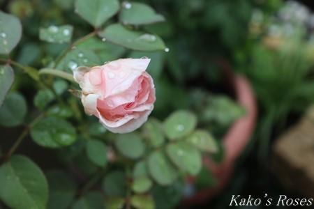 s-IMG_3889kako.jpg
