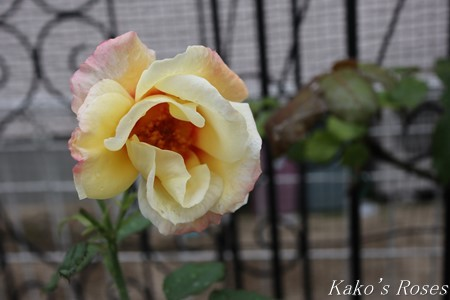 s-IMG_3896kako.jpg