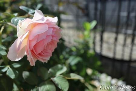 s-IMG_3908kako.jpg