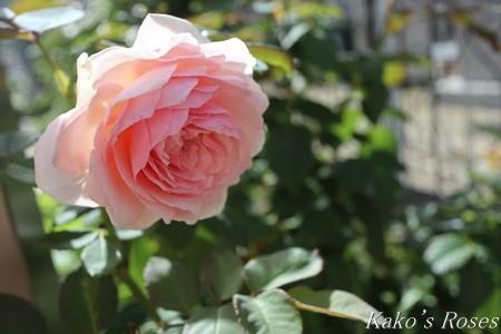 s-IMG_3909kako.jpg