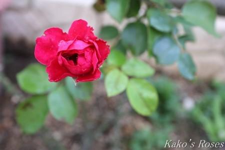s-IMG_3919kako.jpg