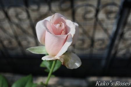 s-IMG_3927kako.jpg