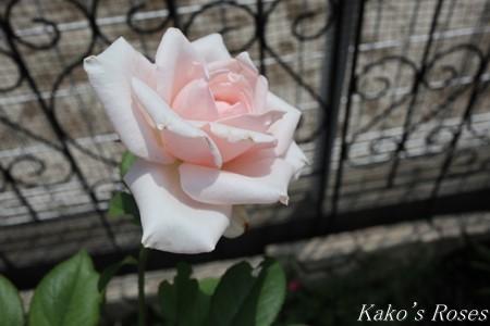 s-IMG_3943kako.jpg