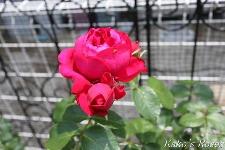 s-IMG_3945kako.jpg