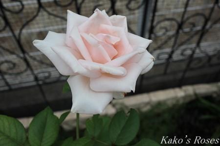 s-IMG_3956kako.jpg