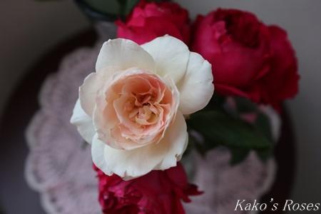 s-IMG_3987kako.jpg