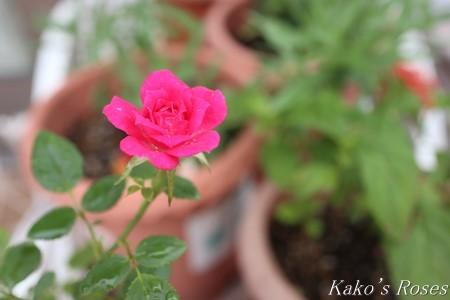 s-IMG_3997kako.jpg