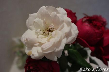 s-IMG_4000kako.jpg
