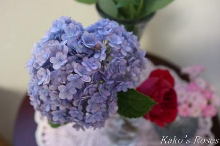 s-IMG_4004kako.jpg