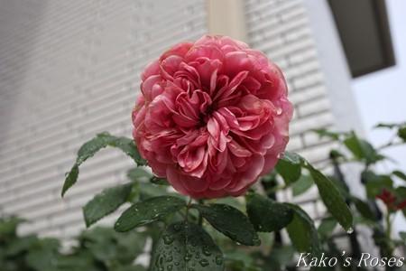 s-IMG_4018kako.jpg