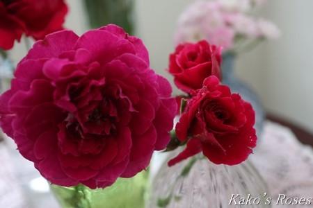 s-IMG_4029kako.jpg