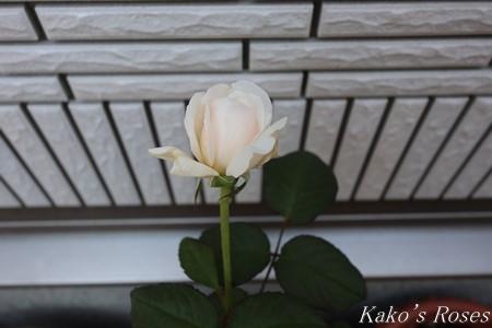 s-IMG_4065kako.jpg