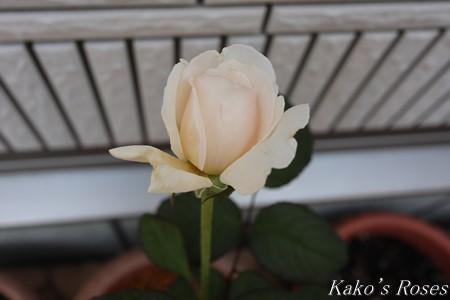 s-IMG_4066kako.jpg