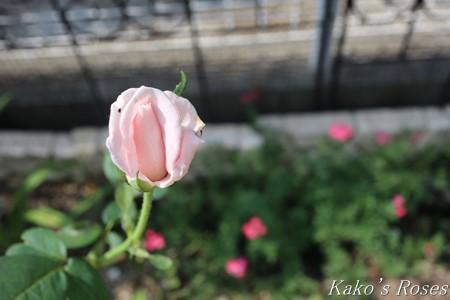 s-IMG_4073kako.jpg