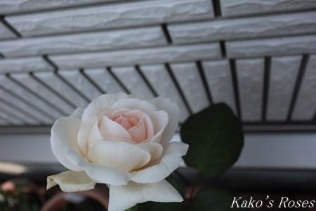 s-IMG_4079kako.jpg
