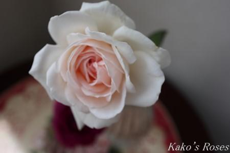 s-IMG_4084kako.jpg