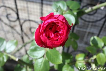 s-IMG_4136kako.jpg