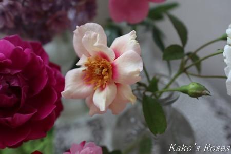 s-IMG_4153kako.jpg