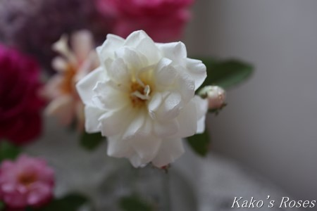 s-IMG_4154kako.jpg