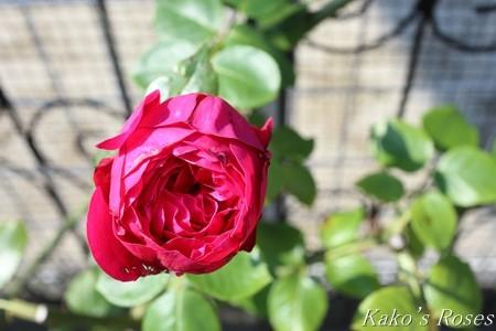 s-IMG_4171kako.jpg