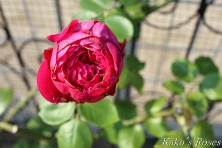 s-IMG_4197kako.jpg