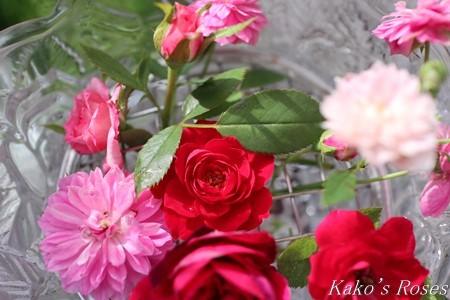 s-IMG_4201kako.jpg