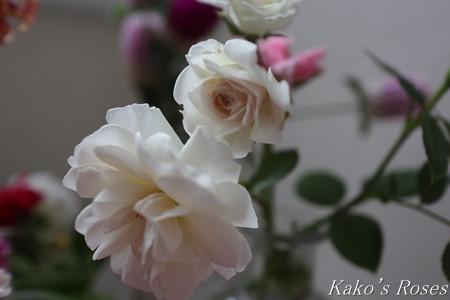 s-IMG_4208kako.jpg