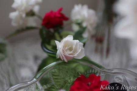 s-IMG_4209kako.jpg