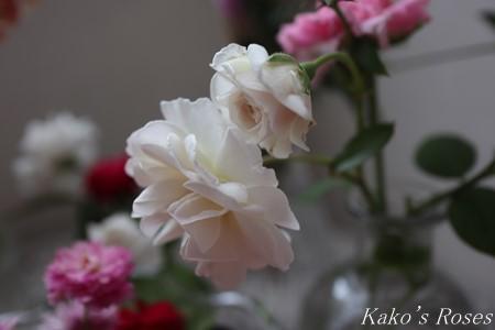 s-IMG_4210kako.jpg