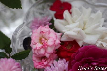s-IMG_4229kako.jpg