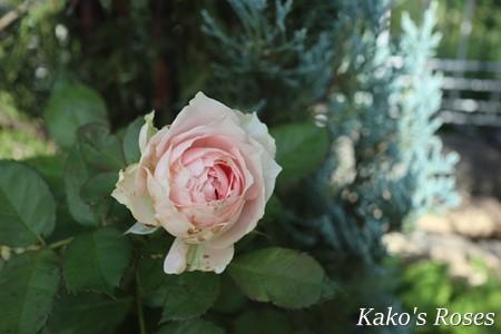 s-IMG_4465.jpg
